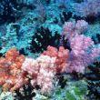 珊瑚小家园