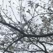 灵雨尘0208