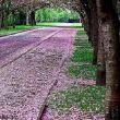 紫色天0124