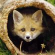 萌蠢老狐狸百度云分享
