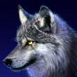 the_xwolf