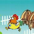 鸡棚飞飞飞