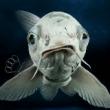 #路亚#不知道有没有鱼喜欢吃老鼠的?