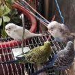 #愤怒的小鸟#