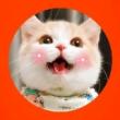 #小小爱宠萌化你#朋友托我照顾的一万好几的猫丢了!