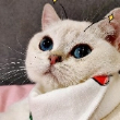 #猫咪日记#这回好了,都知道我脑袋大了!