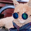 #猫咪#二黄大肚子身体特轻盈