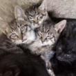 #家有猫咪#原汁原味