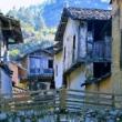 美丽家乡,没车水马龙城市喧嚣,回归朴素享受乡下新鲜空气和质朴民风