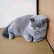 #猫#在办公室偷偷喂老板的猫,感觉这孩子几天没吃饭了哈哈哈哈哈