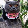 #小小爱宠萌化你#偷猫吗?不需要麻袋的那种,小猫咪的迷惑睡姿