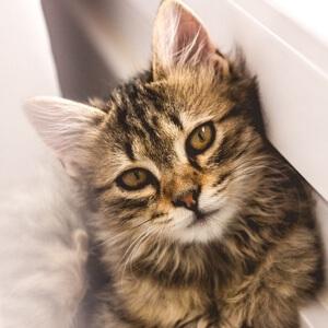 中国历史上第一次亡天下之战