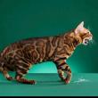 无效跟有效养猫的区别!