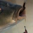 简单分享一下走水如何做钓钓鱼调漂教程 钓鱼 钓鱼技巧
