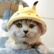 #我要上热门#幸运的遇到了一只爱情锦鲤猫!