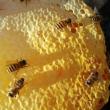 出售野生土蜂蜜,蜂群