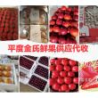 #不一样的人生#怎样选择草莓苗山东育苗基地