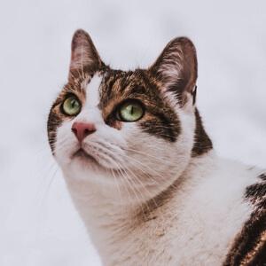 #奇趣#刘涛离婚传言成真?事情一发不可收拾,看完我惊呆了!