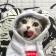 洗完头的猫咪,是最最可爱的