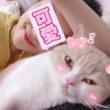 #猫#格里斯:我可不可爱啊