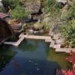 为了一缸清澈的水,继续给净化系统升级#生态鱼缸阳光房 #本心小筑