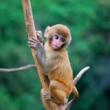小猴一直哭着喊妈妈