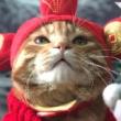 #镜头下的猫咪#这都是减肥不成功的介口...目目是只喵