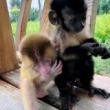 狒狒看孩子小能手,可以帮我分担一下了#创作者计划 #热门 #动物园里有什么