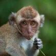 #小小爱宠萌化你#大猴🐵欺负小猴🐵