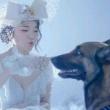 一个村的狗都要团结起来拉布拉多 中华田园犬  原视频何笑笑