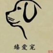 感谢世间稀缺物种格力犬灵缇犬户外细狗