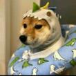 #王者荣耀#又是和猫萌无聊的一天小兵别嚣张
