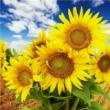 #思维#司马懿的五句良言,看懂两句就够用,看懂了第五句,让你受益一生。你懂了吗?