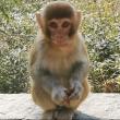 #动物世界#这猴子嫌弃人