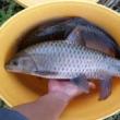 #钓鱼#钓友们这鱼不小吧
