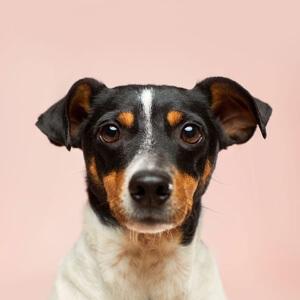 """你绝对没见过的刘怡潼和刘奕君,不愧是""""遵纪守法""""父与子"""
